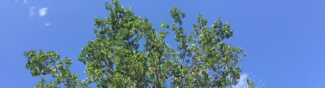 Tree pruning tree trimming tree services denver littleton