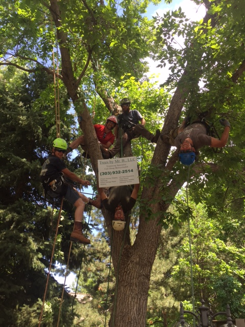 Tree Services Littleton Colorado Tree Removal Tree Trimming